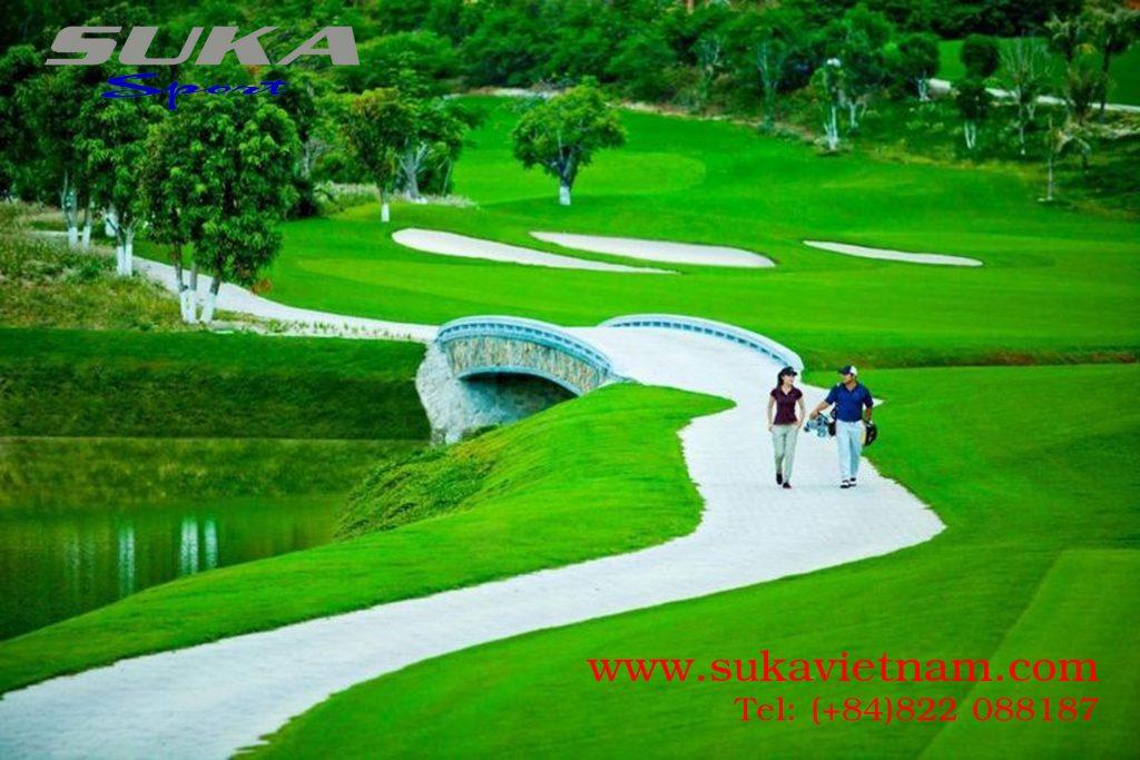 Giống cỏ bermuda sân golf